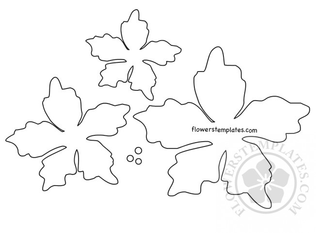 image regarding Daisy Template Printable identified as Poinsettia Flower Template Printable Bouquets Templates